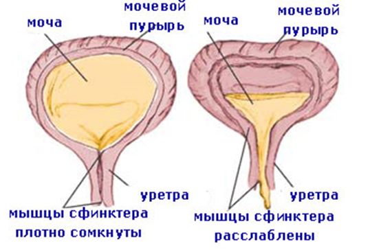 kishechnaya-palochka-krov-v-moche